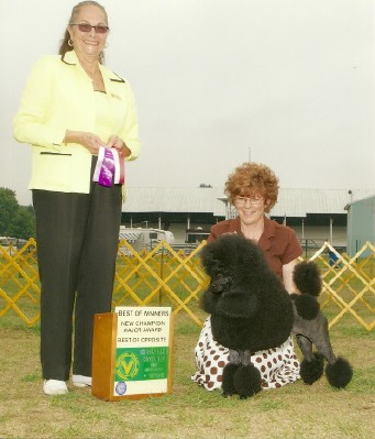 Classiceaglehill South Miniature Poodles Akc Silver