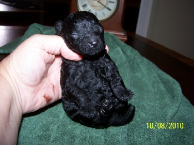 Sunshine looking like a bear cub at 15 days old